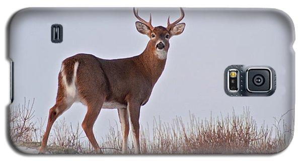 The Watchful Deer Galaxy S5 Case