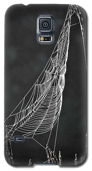 Galaxy S5 Case featuring the photograph The Web by Tom Cameron
