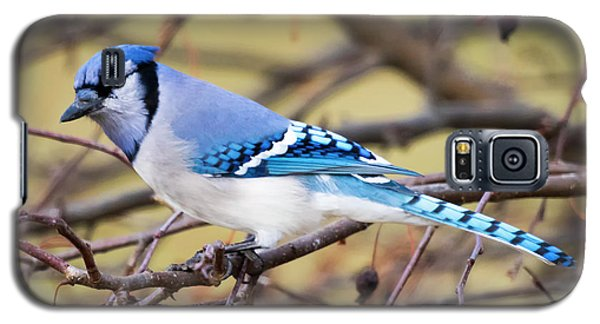 The Winter Blue Jay  Galaxy S5 Case