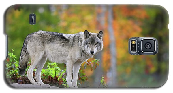 The Wolf. Galaxy S5 Case