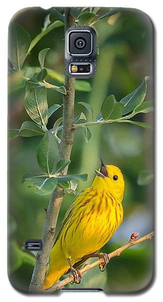Galaxy S5 Case featuring the photograph The Yellow Warbler by Bill Wakeley