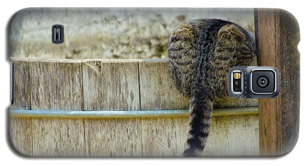 Thirsty Barn Cat Galaxy S5 Case by Wilma  Birdwell