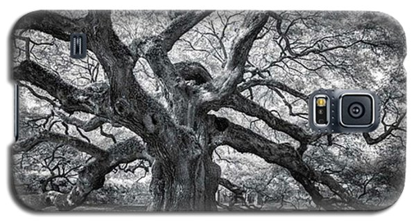 Galaxy S5 Case - This Tree Is Located In Charleston by Jon Glaser