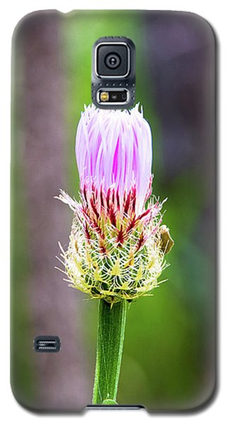Thistle In The Canyon Galaxy S5 Case