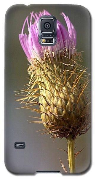 Thistle Galaxy S5 Case by Joseph Skompski