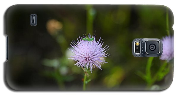 Thistles Morning Dew Galaxy S5 Case