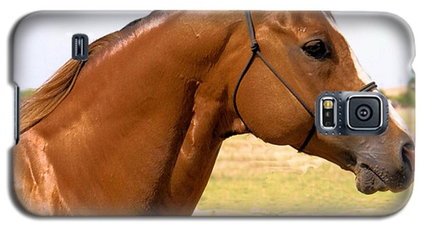 Thoroughbred Head Shot Galaxy S5 Case