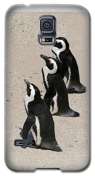 Three African Penguins Galaxy S5 Case