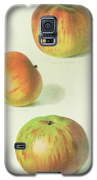 Three Apples Galaxy S5 Case by English School