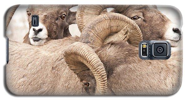 Three Bighorn Rams Galaxy S5 Case