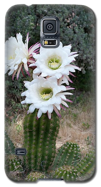 Three Blossoms Galaxy S5 Case by Monte Stevens