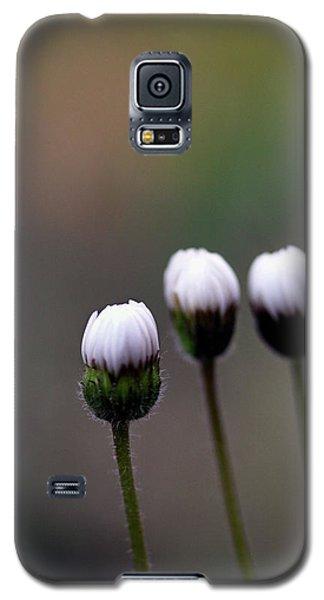 Three Buds Sprawling Daisy Galaxy S5 Case