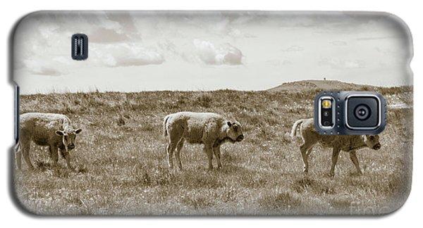 Galaxy S5 Case featuring the photograph Three Buffalo Calves by Rebecca Margraf