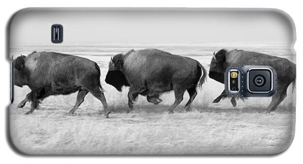 Bison Galaxy S5 Case - Three Buffalo In Black And White by Todd Klassy