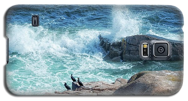 Three Cormorants At Monument Cove, Acadia National Park Galaxy S5 Case