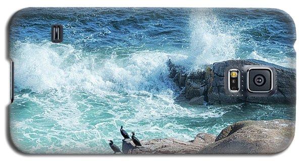 Three Cormorants At Monument Cove, Acadia National Park Galaxy S5 Case