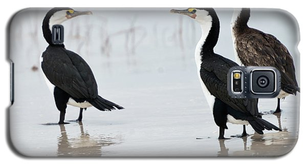 Three Cormorants Galaxy S5 Case by Werner Padarin
