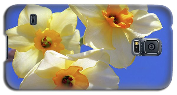 Galaxy S5 Case featuring the photograph Three Daffodils by Judy Vincent