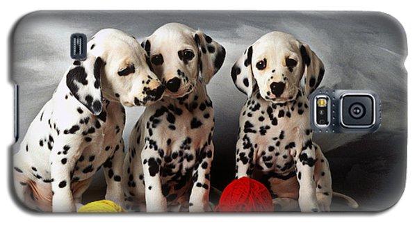 Three Dalmatian Puppies  Galaxy S5 Case