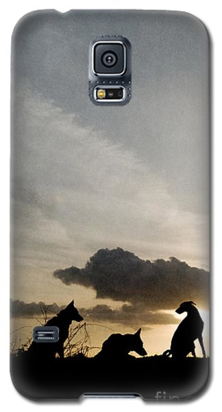 Three Dogs At Sunset Galaxy S5 Case