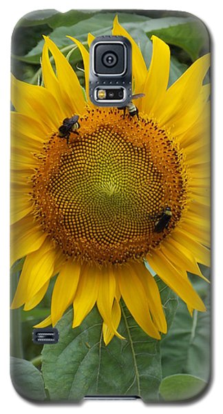 Galaxy S5 Case featuring the photograph Three Is A Crowd by Virginia Coyle