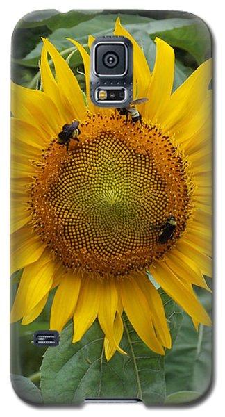 Three Is A Crowd Galaxy S5 Case