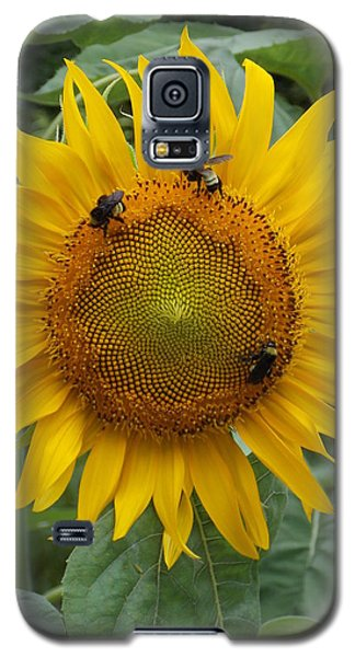 Three Is A Crowd Galaxy S5 Case by Virginia Coyle