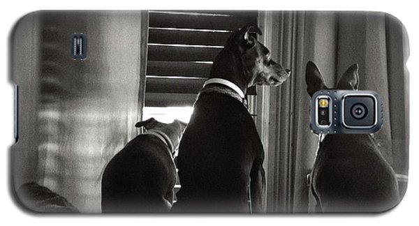 Three Min Pin Dogs Galaxy S5 Case