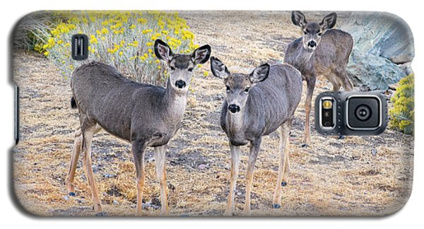 Galaxy S5 Case featuring the photograph Three Mule Deer In High Desert by Frank Wilson