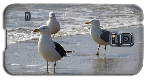 Three Of A Kind - Seagulls Galaxy S5 Case