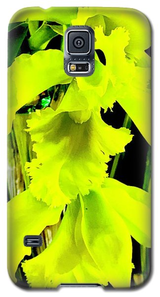 Three Orchids In Yellow Galaxy S5 Case