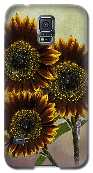 Galaxy S5 Case featuring the photograph Three Painted Sunflowers Plus Two Buds by Diane Schuster