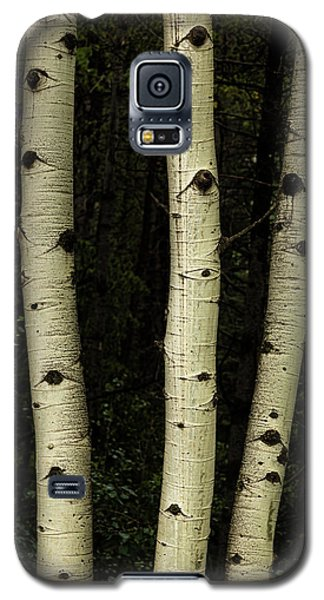 Galaxy S5 Case featuring the photograph Three Pillars Of The Forest by James BO Insogna