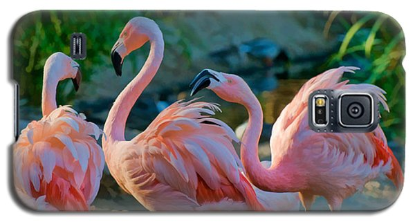 Three Pink Flamingos Strutting Their Stuff Galaxy S5 Case