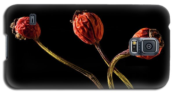 Three Rose Hips Galaxy S5 Case by  Onyonet  Photo Studios