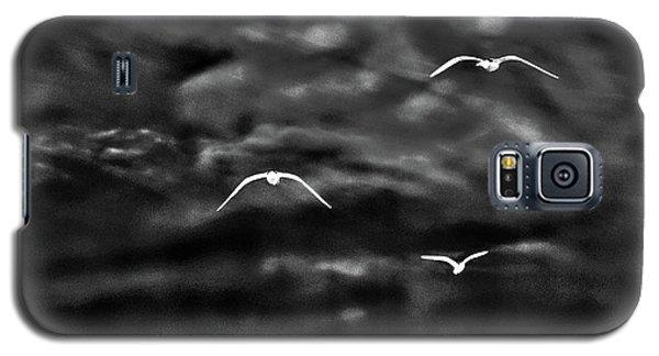 Three Seagulls Galaxy S5 Case
