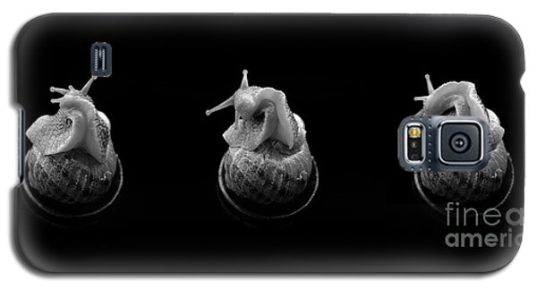 Three Snails Galaxy S5 Case