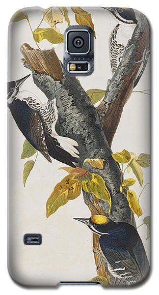 Three Toed Woodpecker Galaxy S5 Case