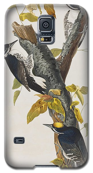 Three Toed Woodpecker Galaxy S5 Case by John James Audubon