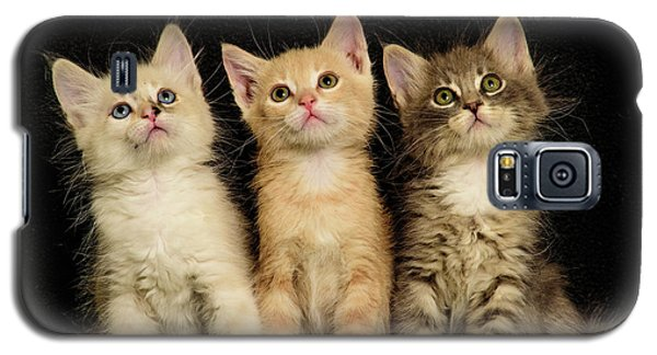 Three Wee Kittens Galaxy S5 Case