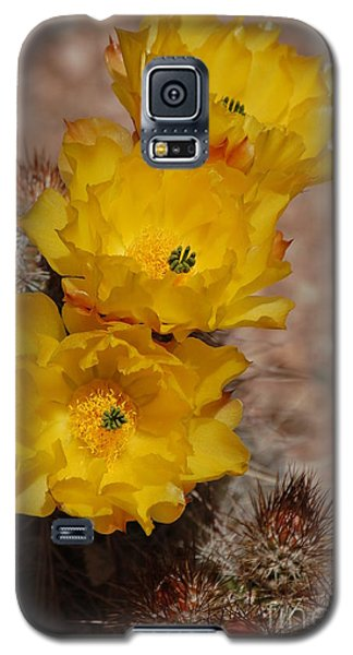 Three Yellow Cactus Flowers Galaxy S5 Case
