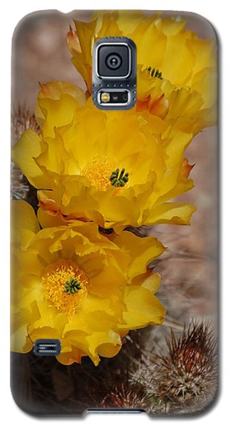 Three Yellow Cactus Flowers Galaxy S5 Case