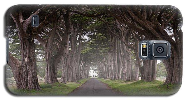 Through The Cypress Galaxy S5 Case