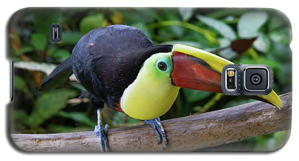 Tico Toucan Galaxy S5 Case
