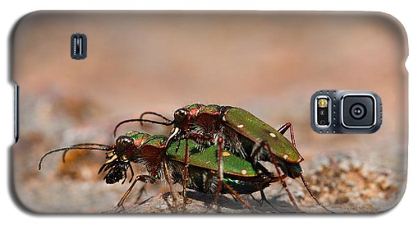 Galaxy S5 Case featuring the photograph Tiger Beetle by Richard Patmore