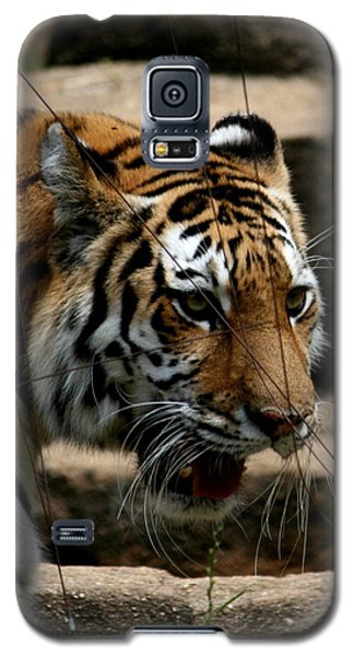 Galaxy S5 Case featuring the photograph Serching by Cathy Harper