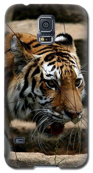 Serching Galaxy S5 Case by Cathy Harper