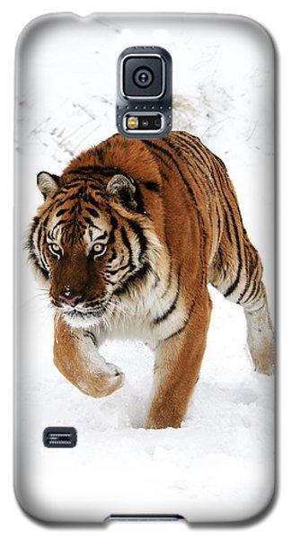 Tiger In Snow Galaxy S5 Case
