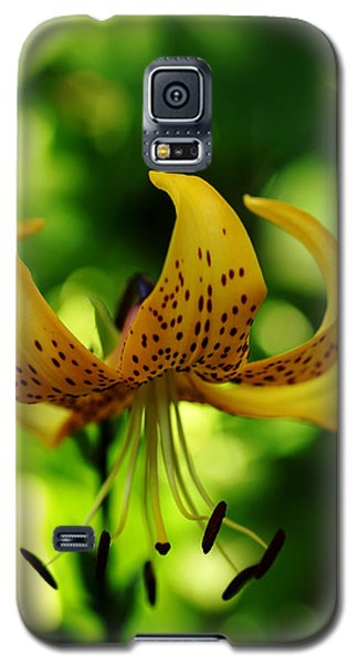 Tiger Lily Galaxy S5 Case by Debbie Oppermann
