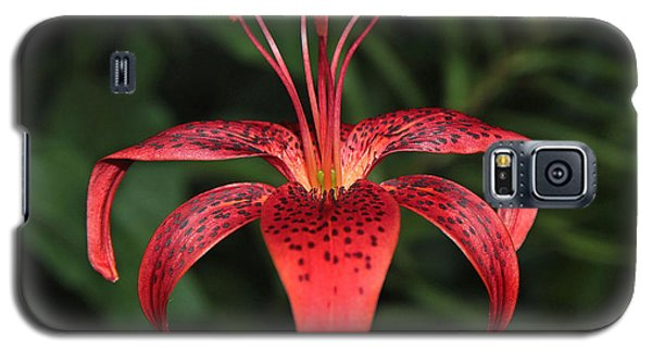 Tiger Lily Galaxy S5 Case by Sergey Lukashin